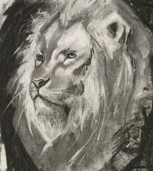 Lion _ charcoal _ Paper _ 25 x 25 _ Available _ £55