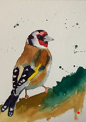 Goldfinch _ Watercolour _ Paper _ 18 x 25 _ SOLD