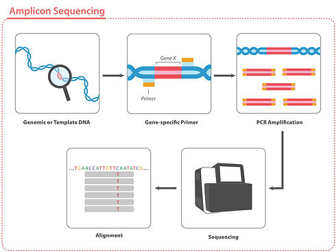 Amplicon-Seq-v4.png