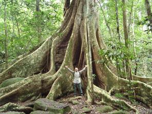 Džungle JV Asie
