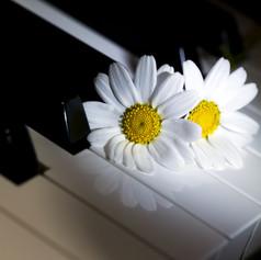 Daisies piano.jpeg