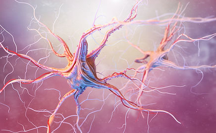neurons-and-nervous-system-PYYJFWU.jpg