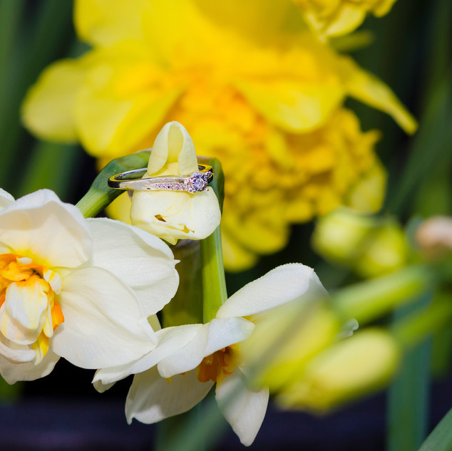 Spring engagement ring on yellow and white daffodils