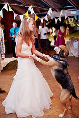 5-Dog-Receptions-682x1024.jpg