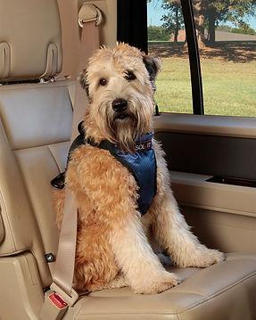dog_car_restraint_6.jpg