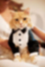 Times-that-Cats-Made-Weddings-Infinitely