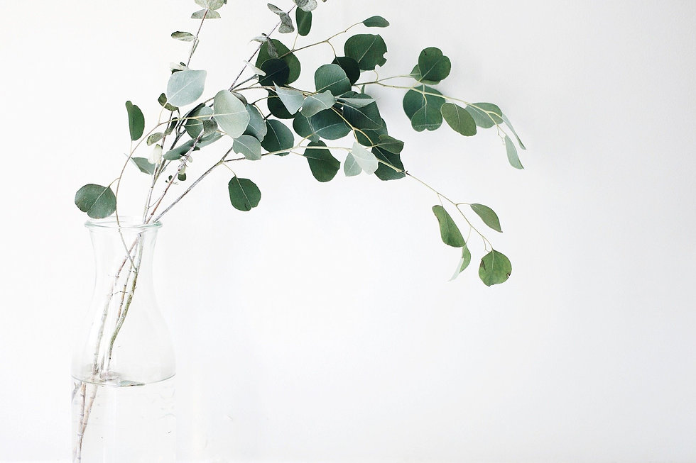 Eucalyptus | Vase | Purifier | Énergie positive | Bien être