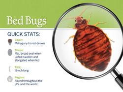 FAQ-Bed Bugs