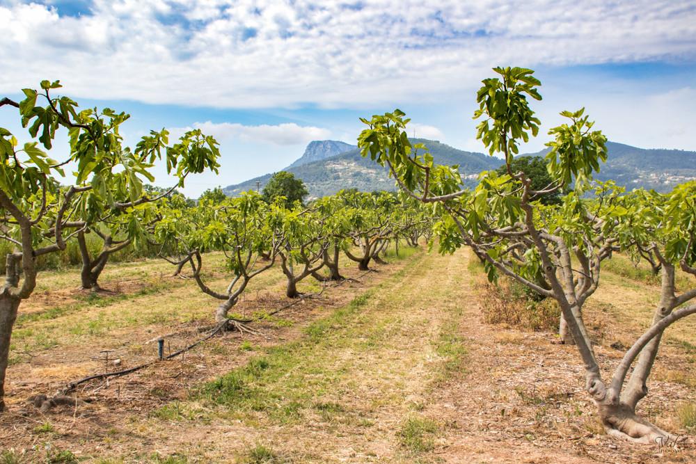 Reportage d'exploitation agricole ou viticole