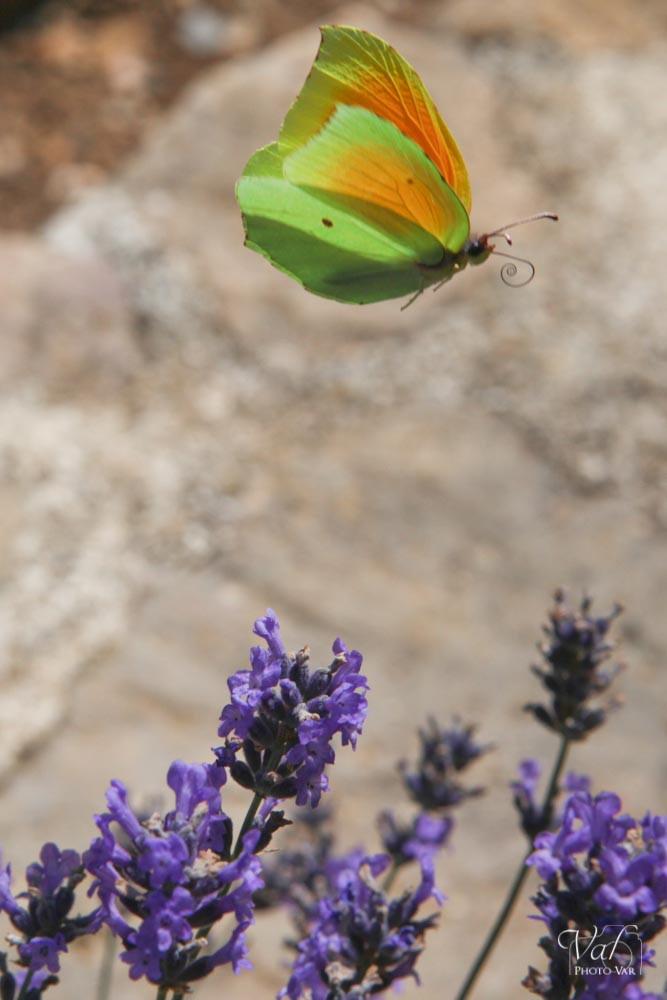 insectes-016.jpg
