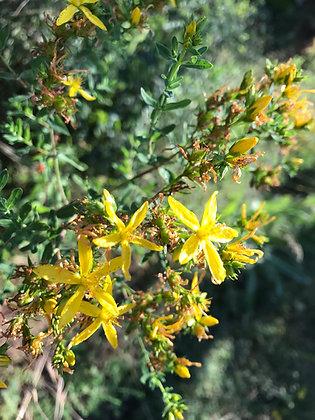 St. John's Wort: Dried Herbs 2 oz