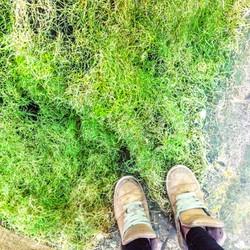 Grass (Detail)