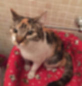 Gato hembra adopcion