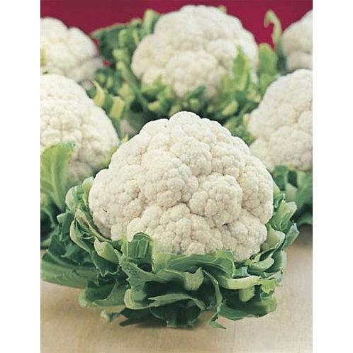 Mr. Fothergill's Packet Seeds Cauliflower All Year Round