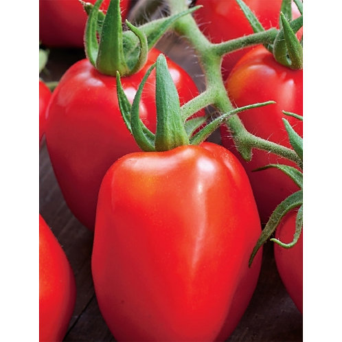 Mr. Fothergill's Packet Seeds Tomato Roma VF