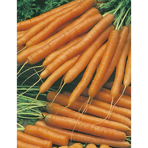 Mr. Fothergill's Packet Seeds Carrot Baby Pak