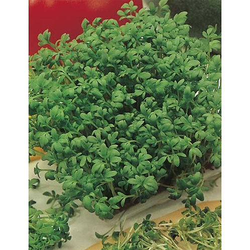 Mr. Fothergill's Packet Seeds Cress Fine Curled