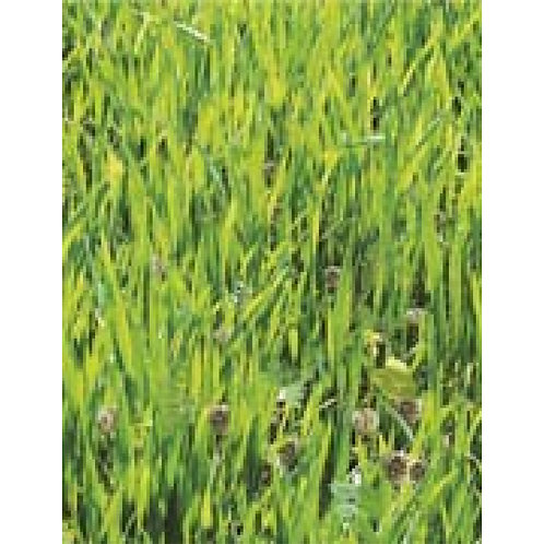 Mr. Fothergill's Packet Seeds Green Manure Mix