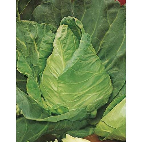 Mr. Fothergill's Packet Seeds Cabbage Sugarloaf