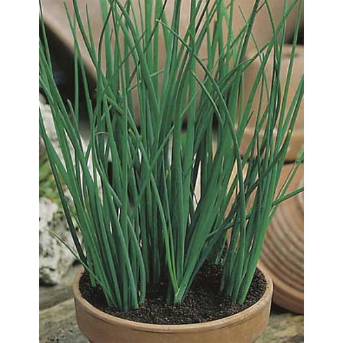Mr. Fothergill's Packet Seeds Chives