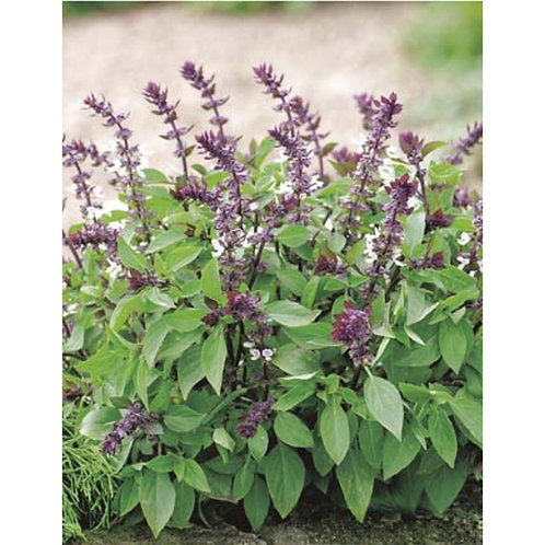 Mr. Fothergill's Packet Seeds Basil Thai