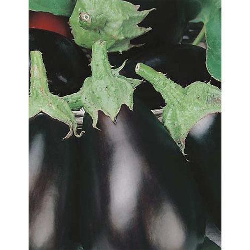 Mr. Fothergill's Packet Seeds Eggplant Black Beauty
