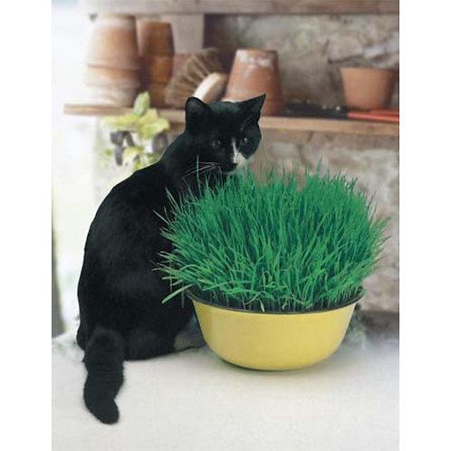 Mr. Fothergill's Packet Seeds Cat Grass