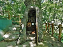Часовня в стволе 400-летнего дуба (ботанический сад Кутаиси)