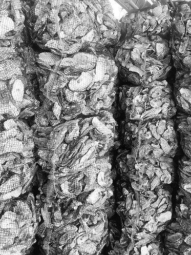 discarded oyster_newtab-22.jpeg.jpg
