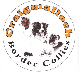 Craig Malloch Border Collies