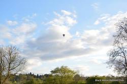 Lonely balloon.jpg