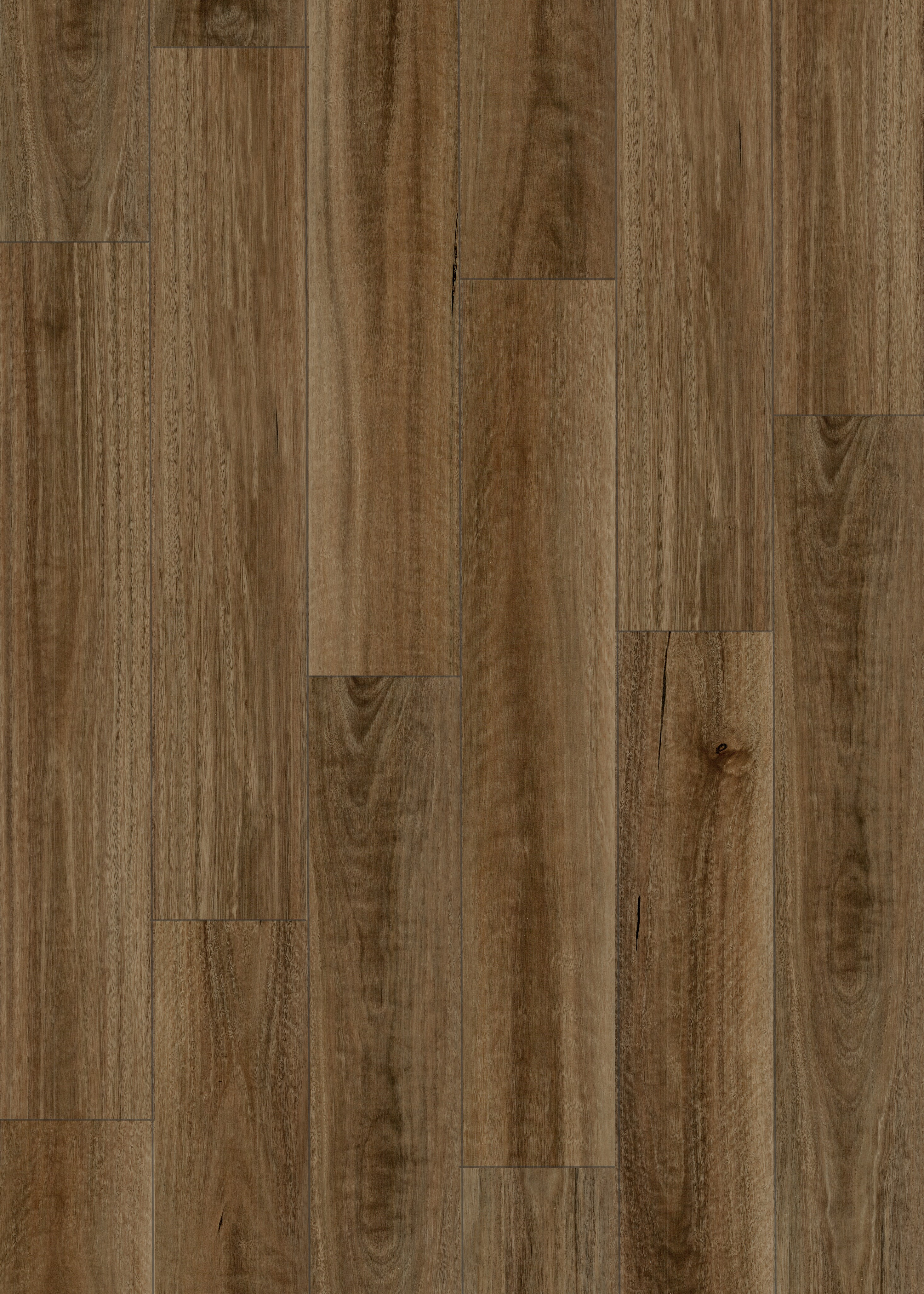 Spotted Gum L