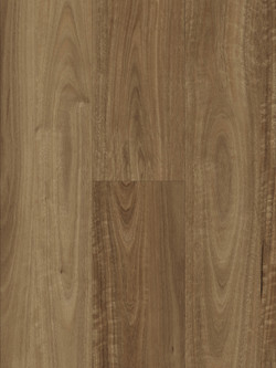 HYB-55103 Natural Spotted Gum
