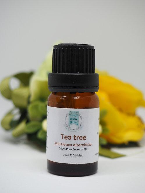 Tea tree 茶樹