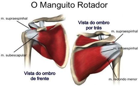 Anatomia do Ombro - Dr. Fernando Furlan Cirurgião de Ombro e Cotovelo