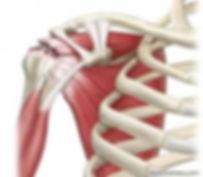 Lesão de manguito rotador - Dr. Fernando Furlan Cirurgião de Ombro e Cotovelo