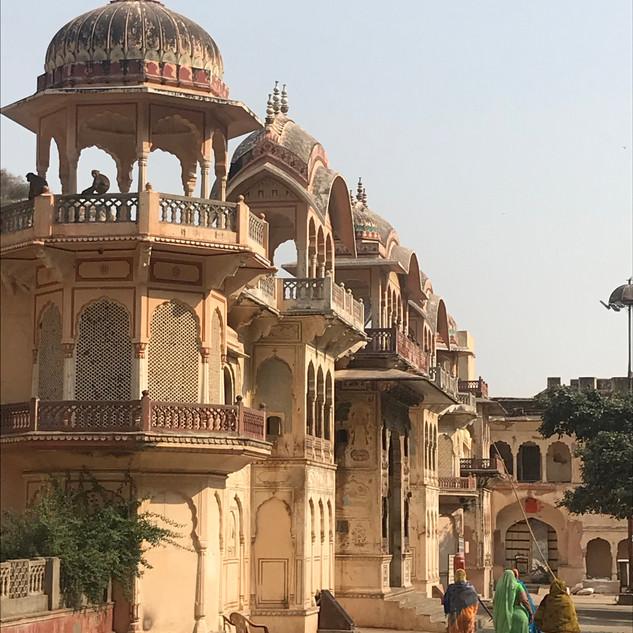 Monkey Temple near Jaipur