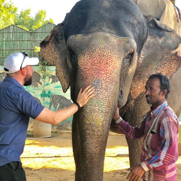 Elephant rides near Jaipur