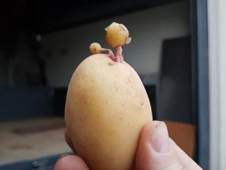 Wiesenbacher Kartoffeln kaufen