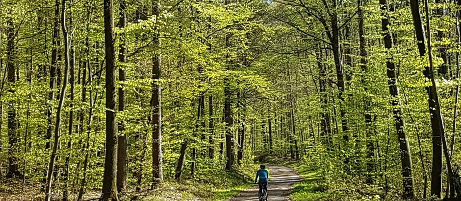 Der Wald – Retter aus der CO2- Falle
