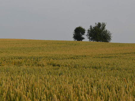 Von Gräben, Graswegen und einzeln stehenden Bäumen