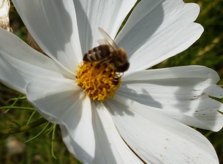 Gesetzespaket zur Stärkung der Artenvielfalt beschlossen