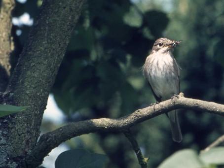 Großes Vogel-Biotop durch Renaturierung