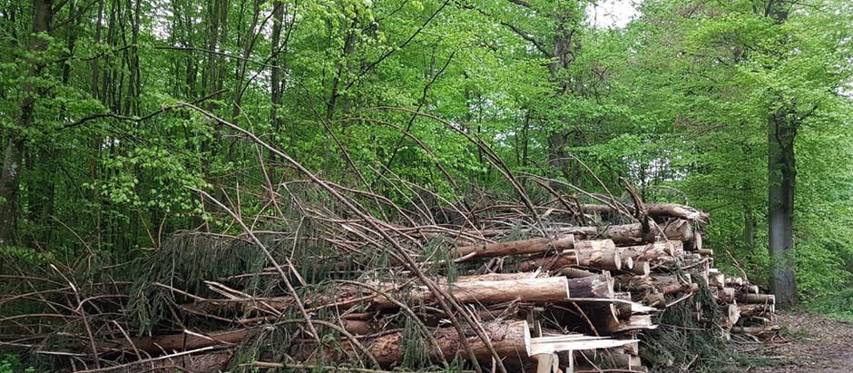 Bürgerbeteiligung bei Fragen der Nutzung der Wiesenbacher Natur-Ressourcen