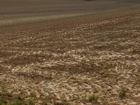 Landwirtschaft in der Krise - Ist tatsächlich nur der Verbraucher daran schuld?