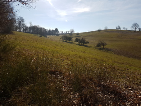 Lebensräume für bedrohte Arten in Wiesenbach