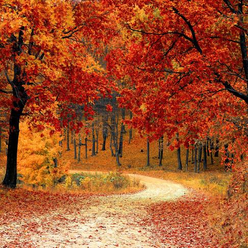 Quoi faire cette semaine, du 14 au 20 Septembre?