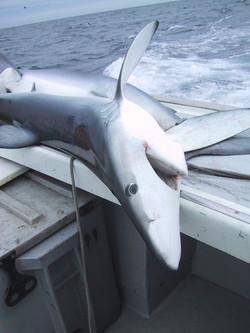 Shark Fishing 012.jpg
