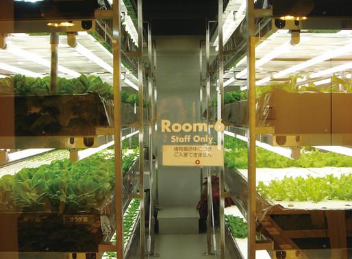 什麼是植物工廠,水耕食物?無毒、安全、更營養!?