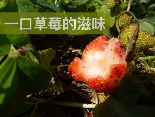 一口草莓的滋味